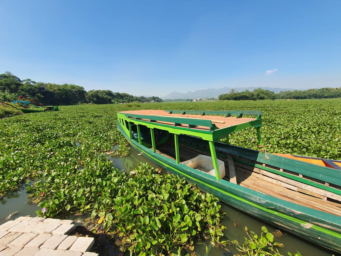 Water Hyacinth covering the surface of the Citarum River